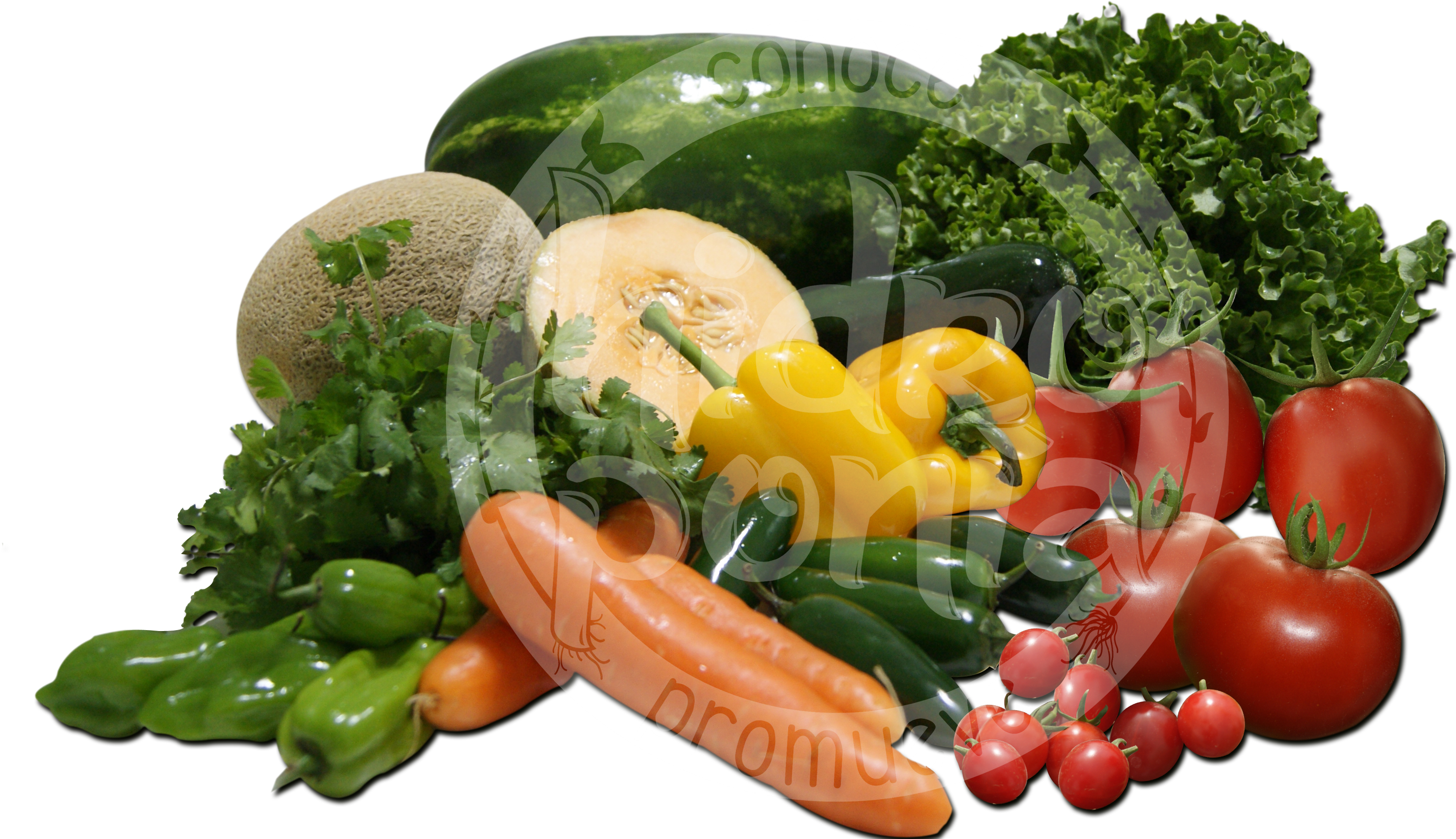 verduras_hidroponicas