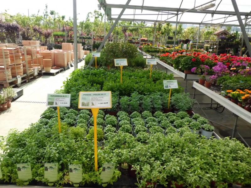 planta-aromática-2-800x600