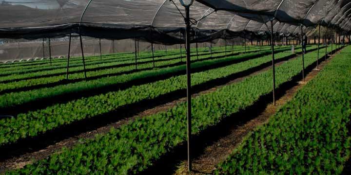 agriculturaprotegida