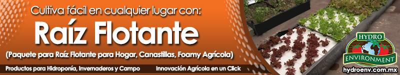 Banner 04 Raiz Flotante