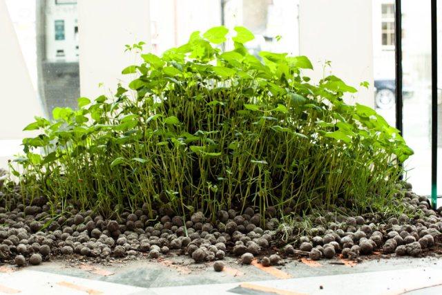 jardín-seedbombs