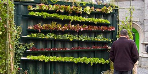 cultivo aeroponico casero