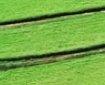 cultivo en traspatio de stevia