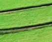 cultivo en nft