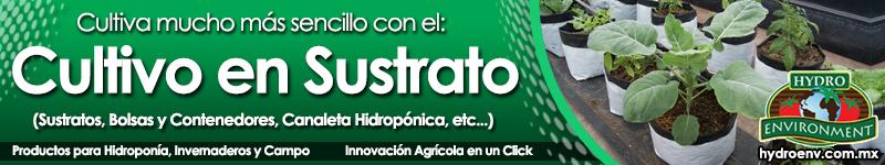 Banner 03 Cultivo en Sustrato