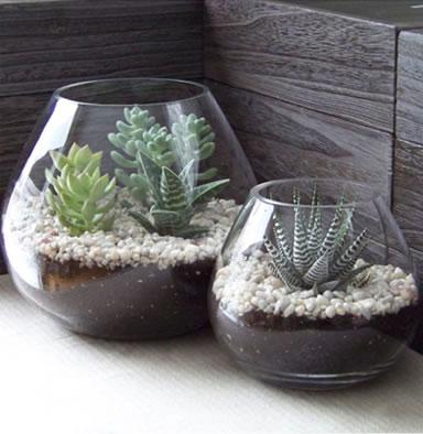 Haz Tu Propio Terrario En Casa Facil Y Rapido - Terrario-para-plantas