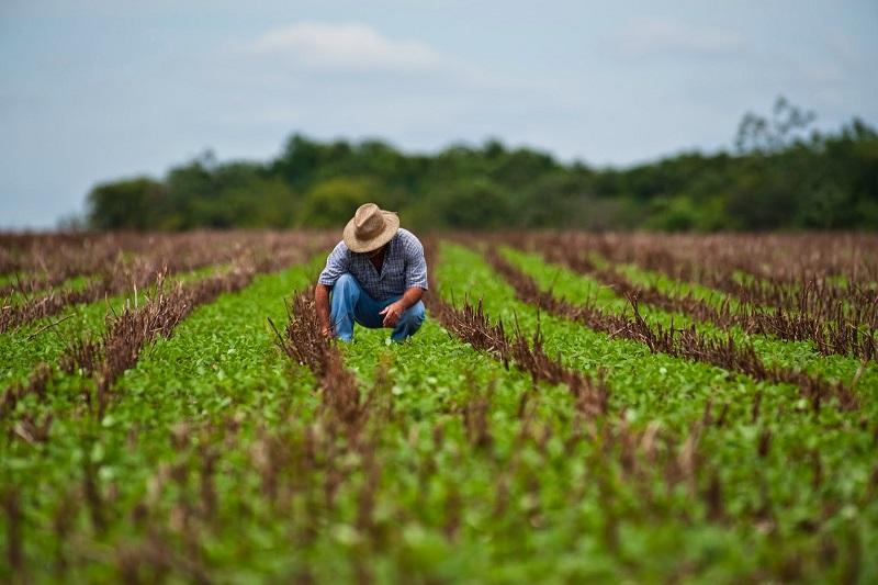 agricultura_en_México