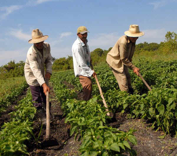 agricultura_producción