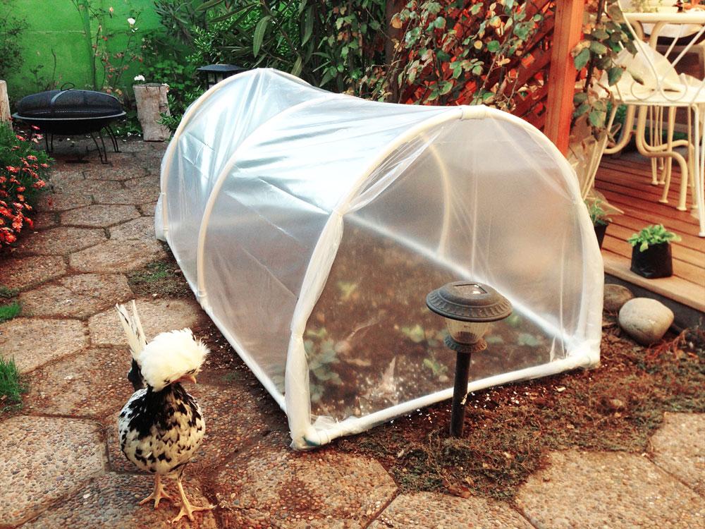 como-hacer-mini-invernadero