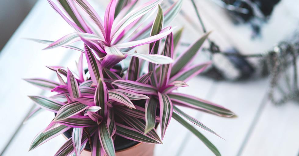 tericamente cualquier planta se puede cultivar a travs de la hidropona sin embargo se recomienda empezar con plantas de la siguiente lista aechmea