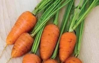 cultivo de zanahoria baby