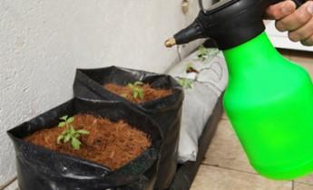 aplicacion_insecticida_organico