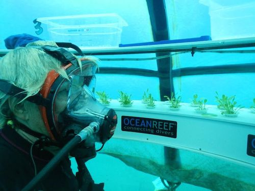 cultivo-submarino2