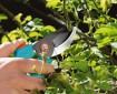 poda-para-plantas-y-arboles