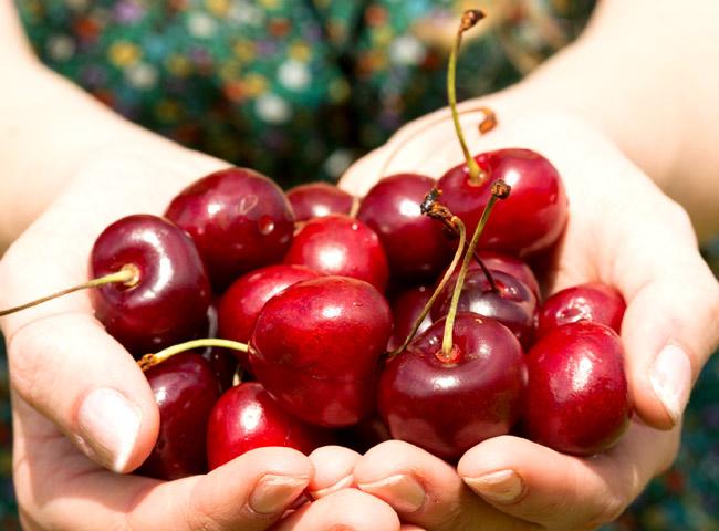 cultivo de cereza