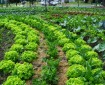 asociaciones de cultivo