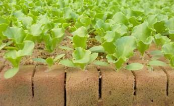 foamy agrícola