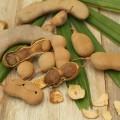 producción de tamarindos