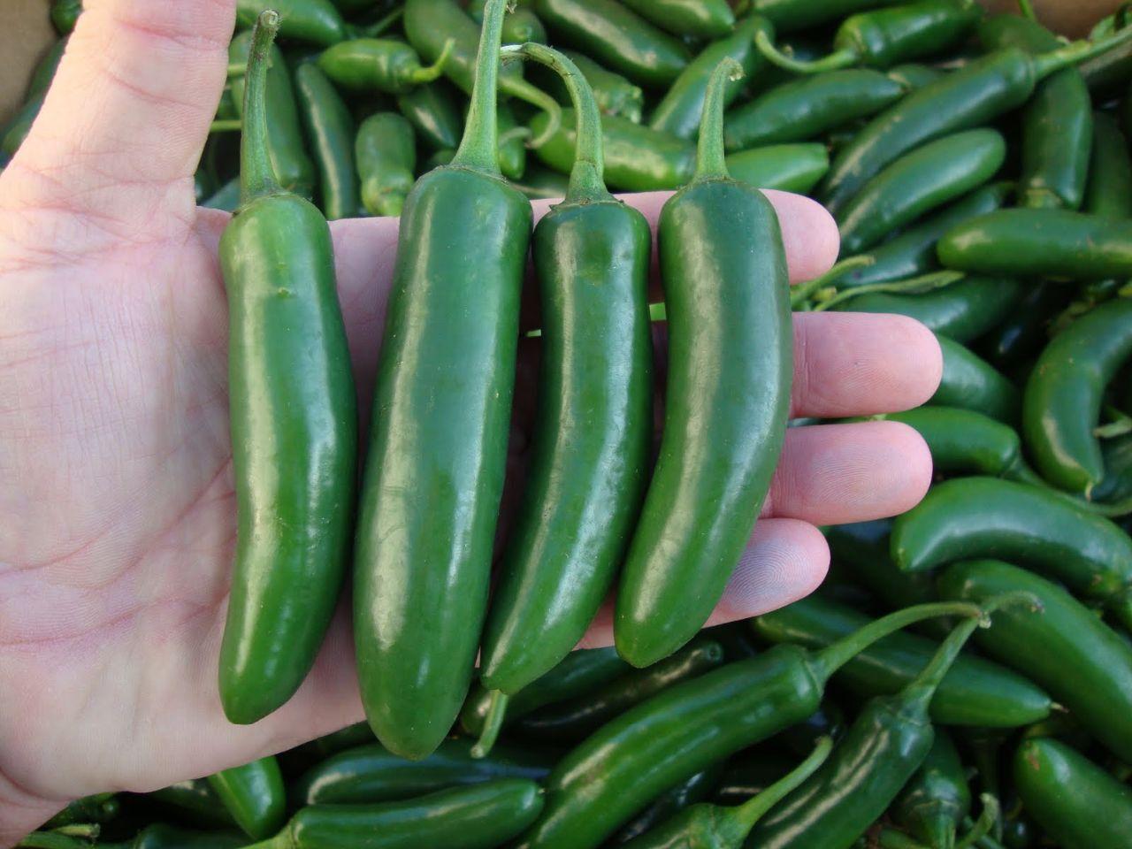cultivo-de-chile-serrano