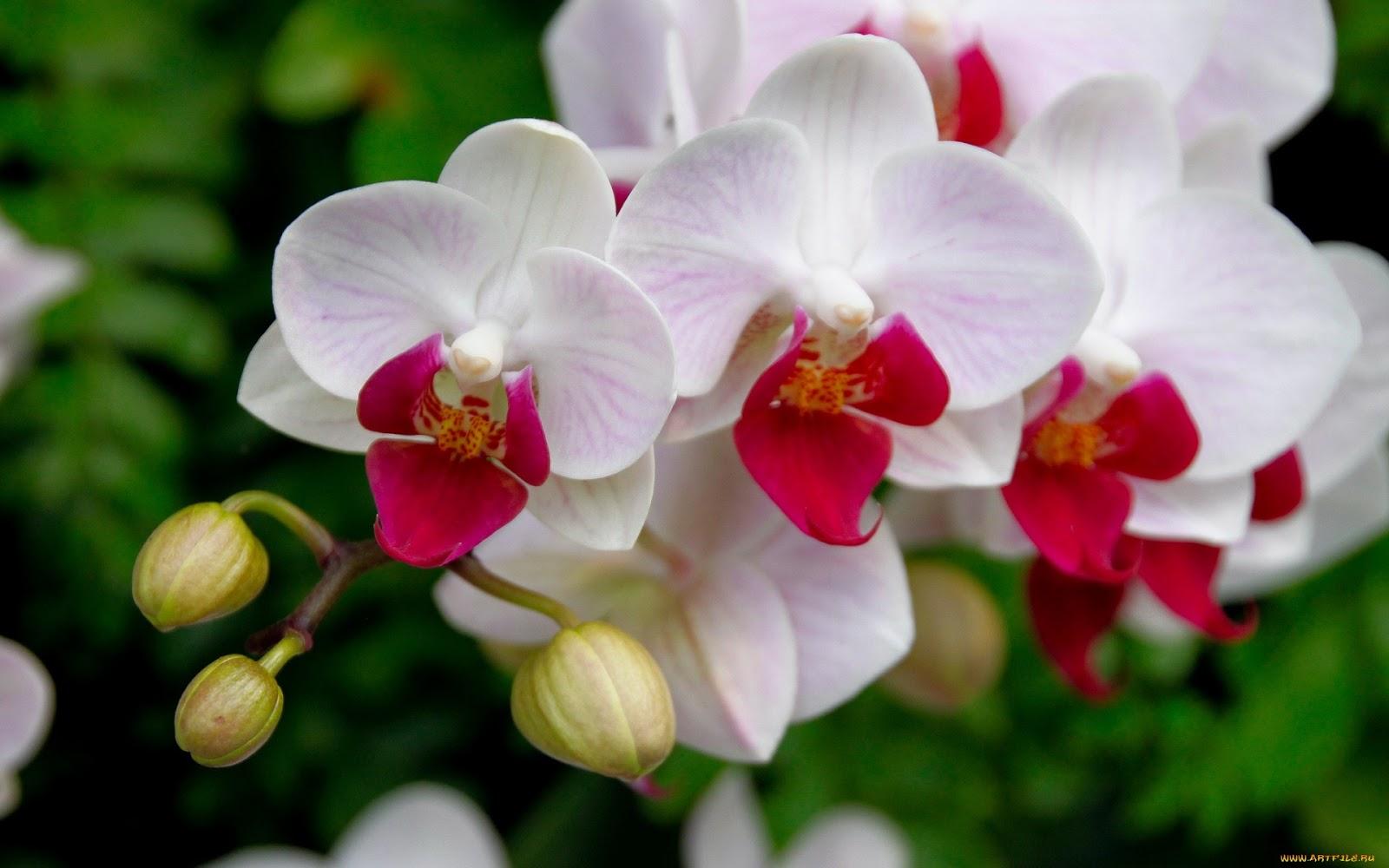 cultivo de orquídeas casero