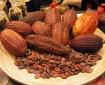 cacao_semillas