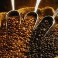 granos de café mex