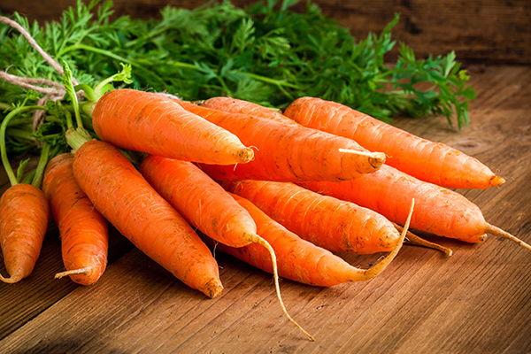 producción de zanahoria en México