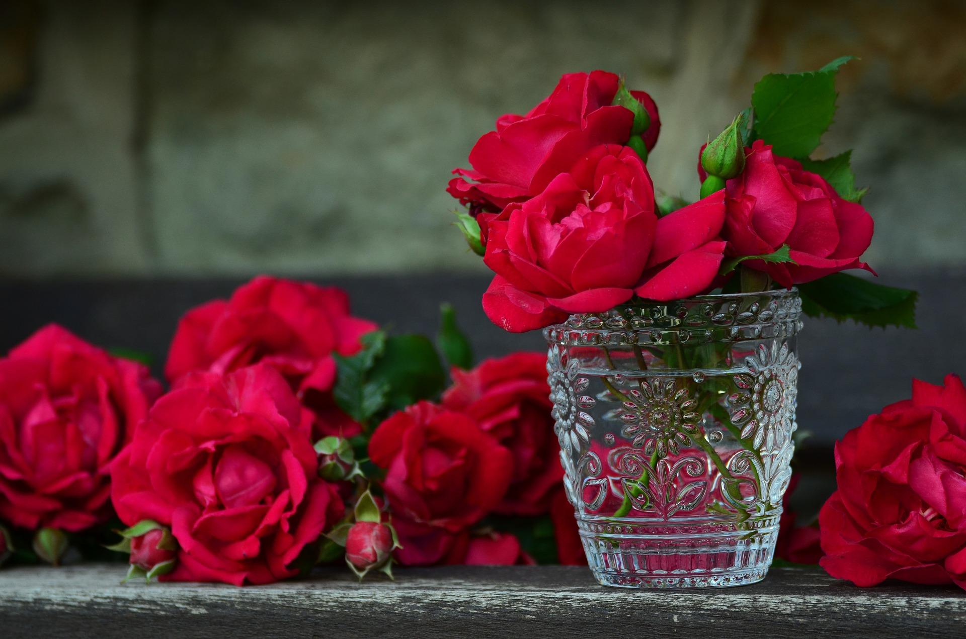 cultivo de rosas en México