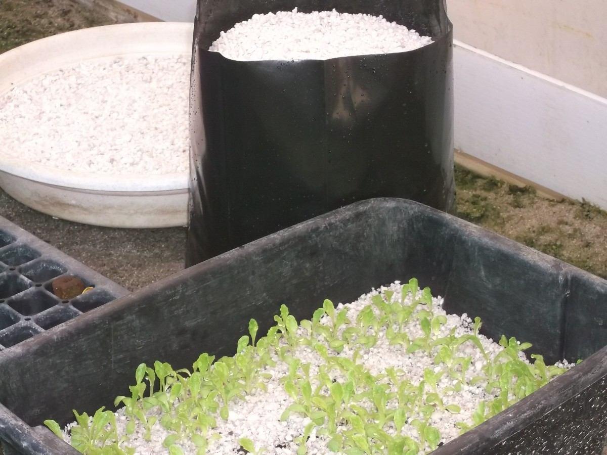 cultivo en perlita