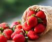 cultivo de fresa en México