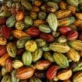 1 Fruta Cacao